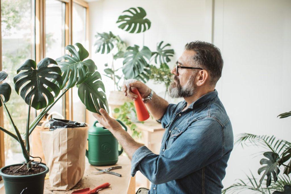 Plantas de Interior: Todo lo que necesitas Saber